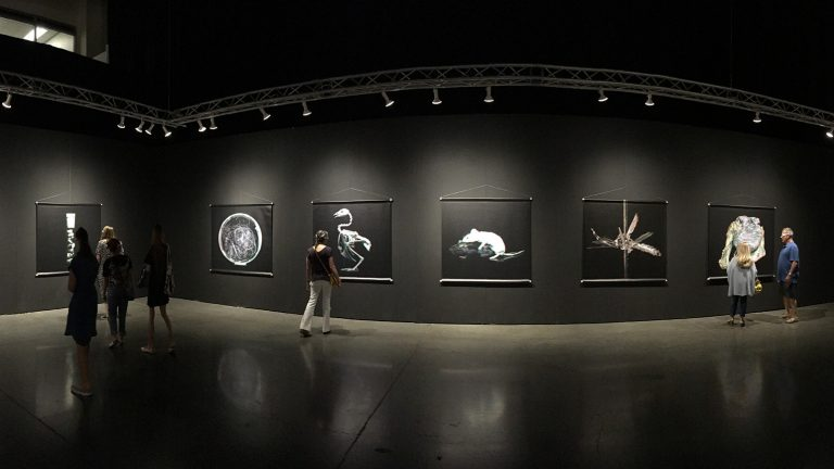Photograph of gallery installation with large images of specimens from the Center for PostNatural History